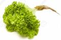 Lettuce Lolla Biondi P/P 12ct